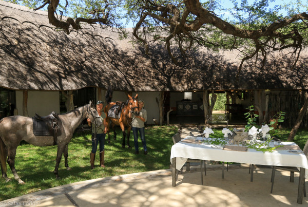 Imvelo Safari Lodges - Camelthorn - Under the Camelthorn for champagne brunch at the end of your ride (1 of 1)